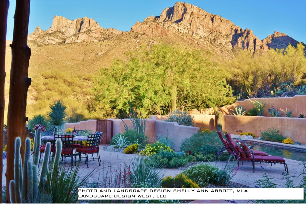 Designing Sustainable Colorful Desert Landscapes 10 A M To Noon Aug 2018 Tucson Botanical